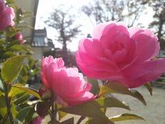 花(2011.11).jpg
