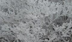 樹氷.JPG