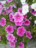 花(ピンク色)-2.jpg